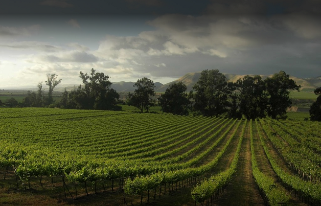 Goodchild Vineyard in Santa Maria Valley