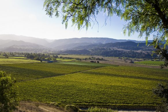 Valley View Vineyard in Santa Ynez Valley
